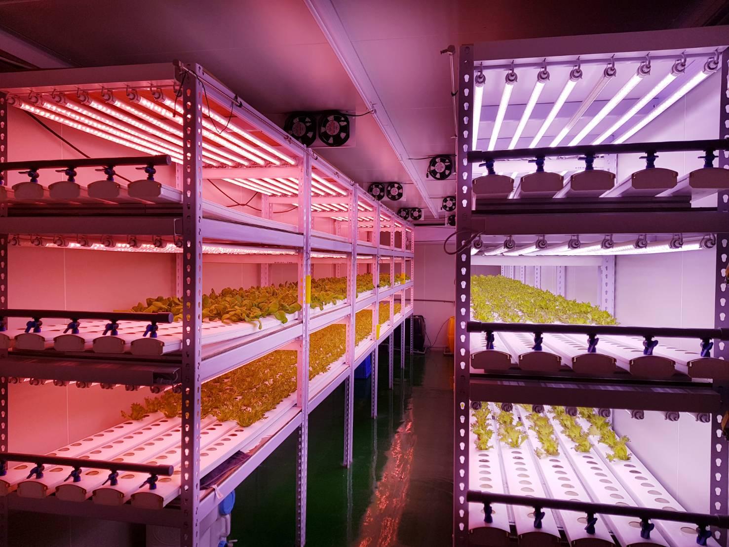 作物生長燈搭配